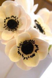 anemone4